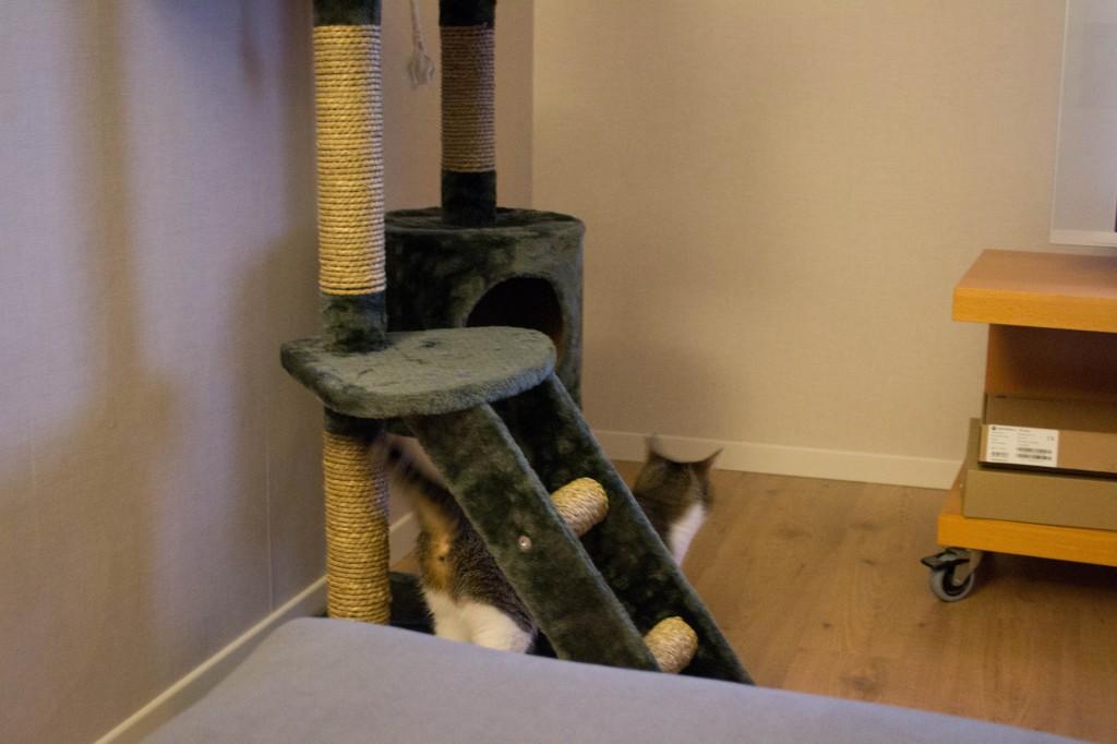 Tara undersöker sitt nya hem