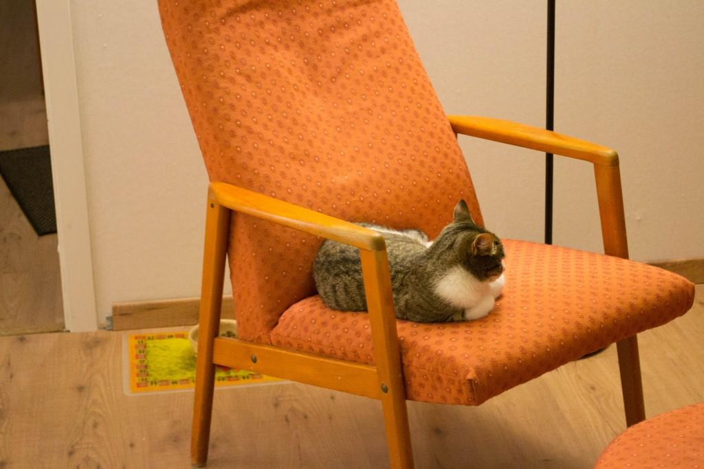 Tara har hittat sin favorit stol
